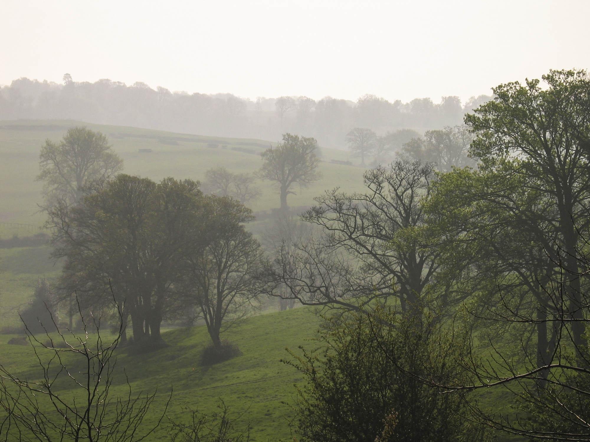 Dawn Mist, Petworth Park